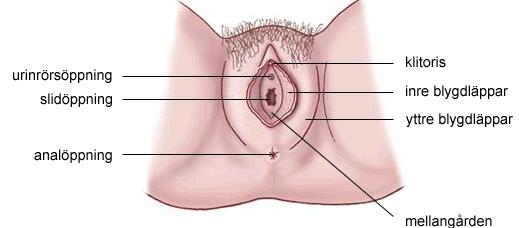 kvinnlig orgasm klitoris sex video anal